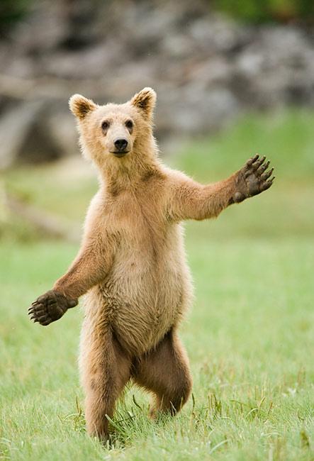 Bruins Take Game 2